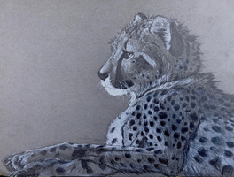 10th 12th Grade Honorable Mention The Cheetah