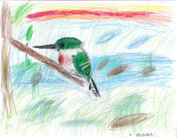 2nd 3rd Grade Honorable Mention Kingfisher in Swamp at Sunrise